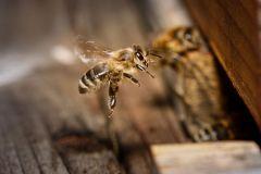 Bienen_-9