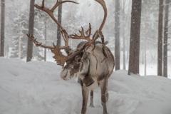 Lappland-6-von-10