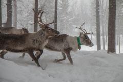 Lappland-7-von-10