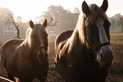 8_Pferde-1