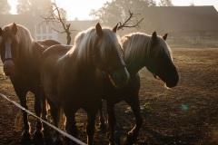 8_Pferde-10