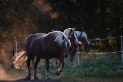 8_Pferde-2