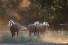8_Pferde-3