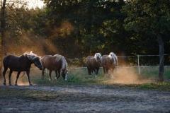 8_Pferde-4