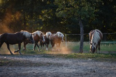 8_Pferde-5