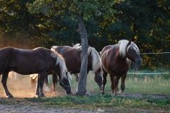 8_Pferde-6