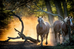 8_Pferde-9